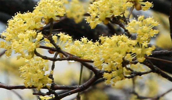 철쭉과진달래-살구매화-벚꽃-벚꽃나무-매화-살구-매화-매실-벚꽃-벚꽃나무-매실나무-매화나무-살구나무-홍매화-청매화-매실나무-매화종류-벚꽃나무-봄꽃-식물-봄-계절-꽃