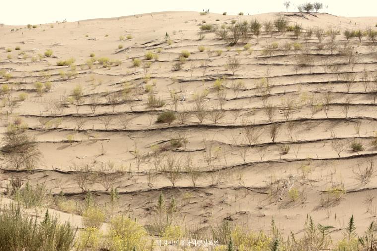 쿠부치 사막을 조사하다! 쿠부치 사막을 지키는 사람들의 만찬.