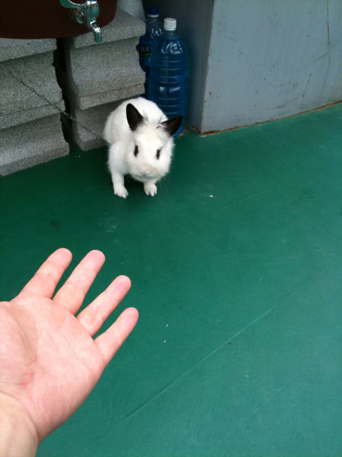 주유소 토끼~~~ 쫑쫑!!