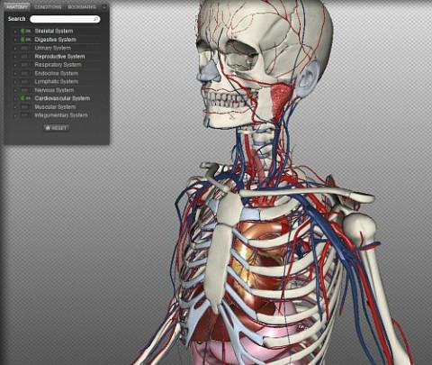 (그림 4. HTML5 3D BioDigital Human)