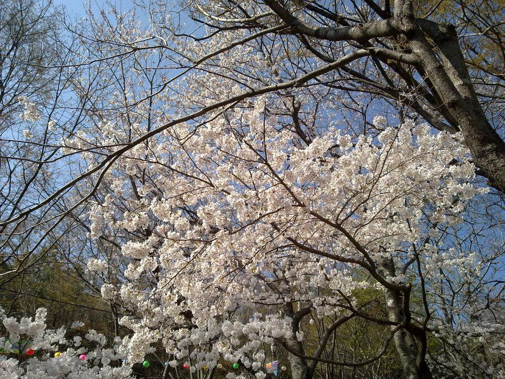 팔공산 갓바위 공원 입구 부근에서 노키아 N97 미니로 찍은 무보정 사진 by Ara
