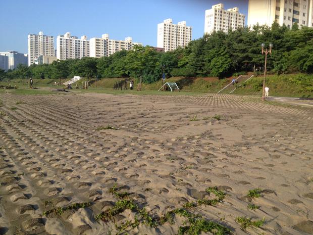 탄천변은 범람의 흔적으로 모래가 쌓였습니다