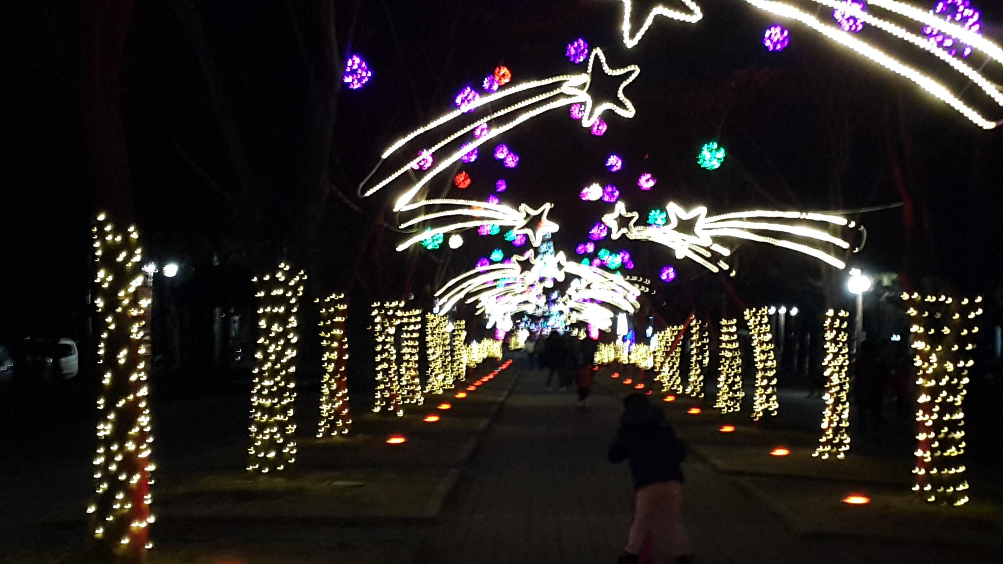 대전 보라매크리스마스트리공원에서!