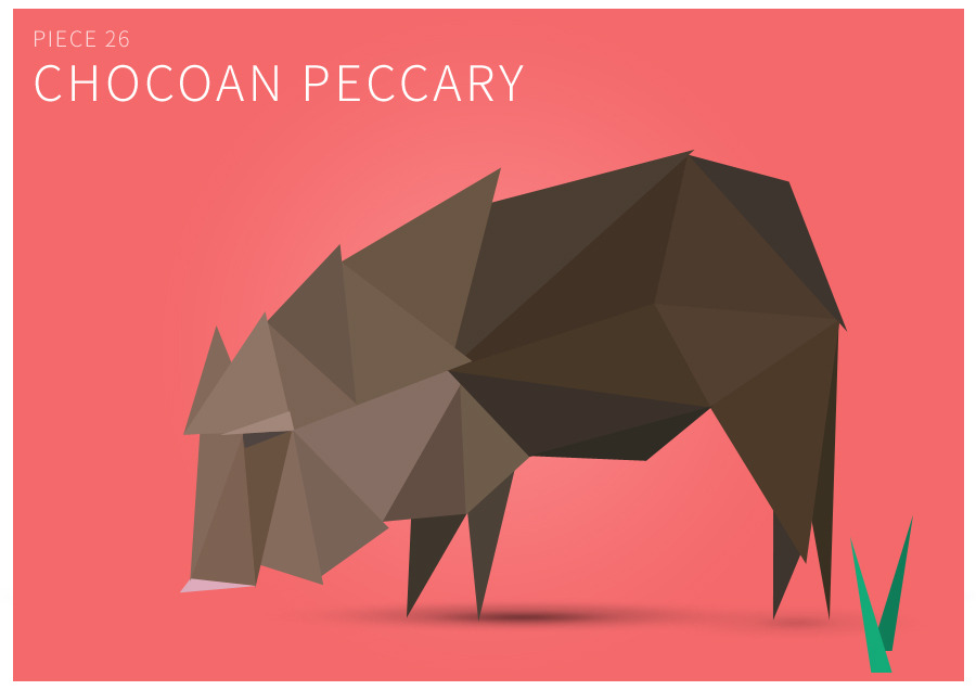 Piece 26 Chocoan peccary