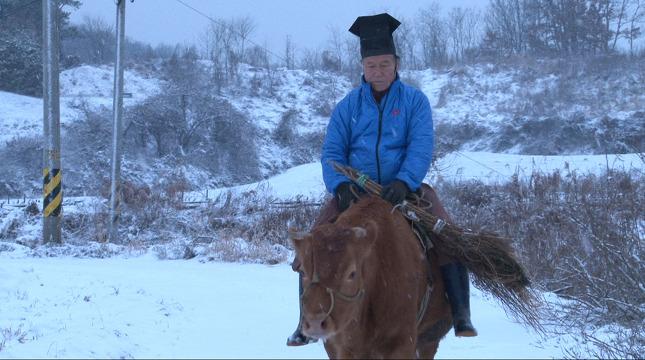 인간극장 아버님 가라사대 소를 타고 가는 조육형 할아버지