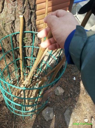 나무 지팡이
