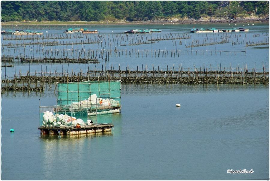 여수앞바다 양식업 사진