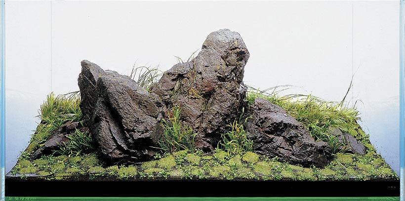 iwagumi 石 组