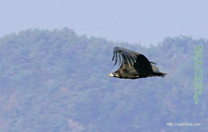 독수리 비행장면