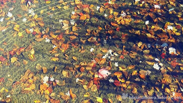 맑은 호숫물에 쌓인 낙엽