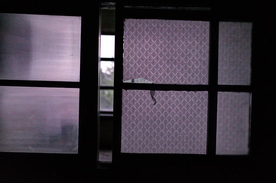 오래되어 닫기지않는 창문틈 사이로 보이는 오래된 풍경