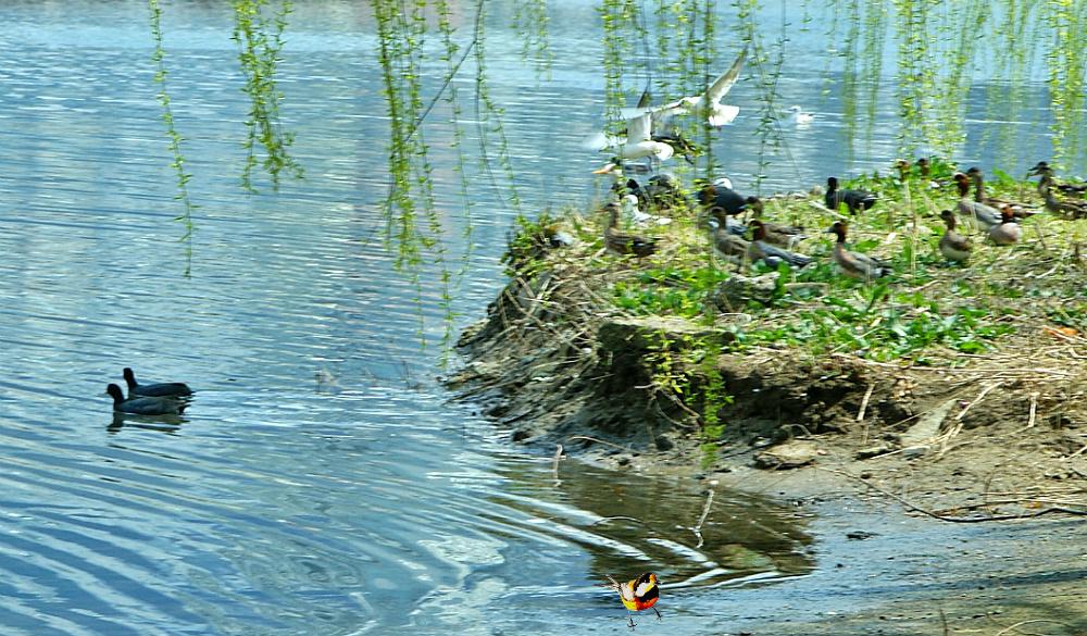 실버들 늘어진 물가의 봄 풍경