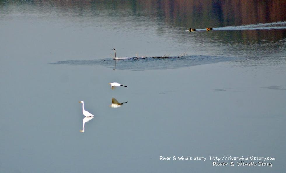 백로의 호수