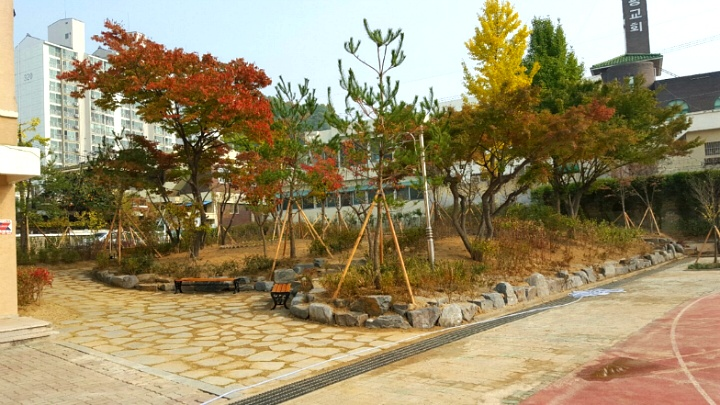 대전대동초등학교 학교숲 모퉁이숲