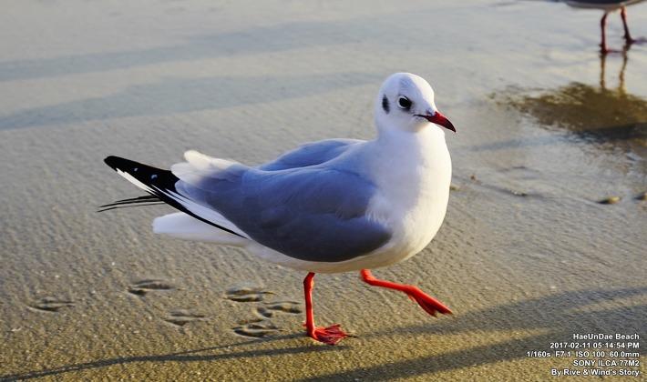 조적(鳥跡)