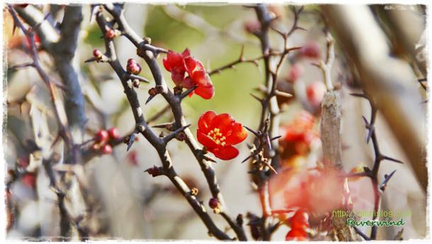 한겨울에 핀 빨간 예쁜꽃