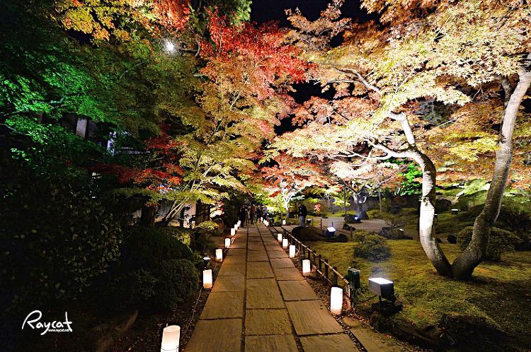 엔쓰인 단풍나무 길