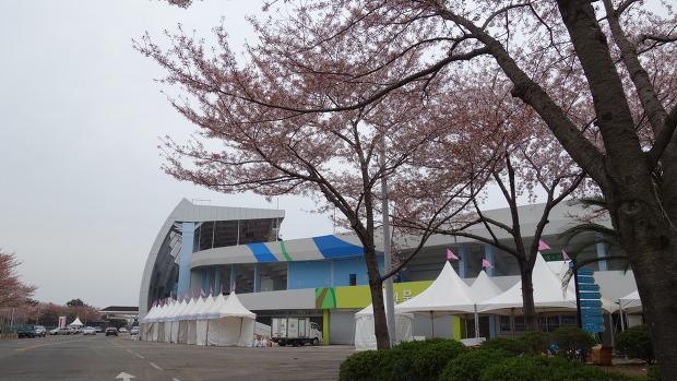왕벚꽃축제