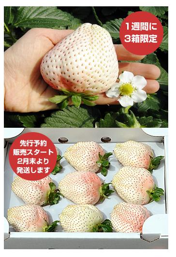 일본 하얀 딸기, 가격이 무려 한 상자 15만원!