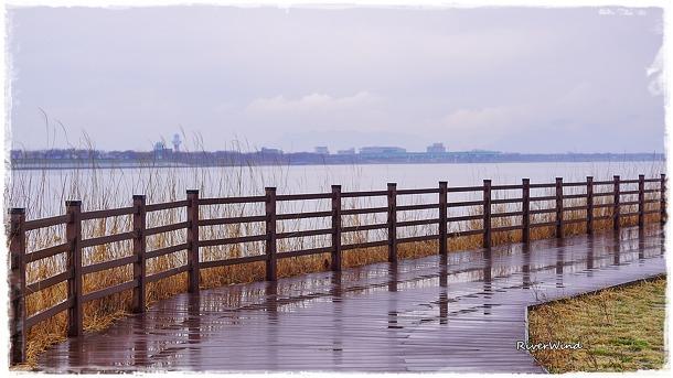 봄비오는 낙동강변