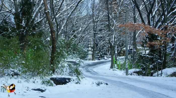 눈오는날  고당봉가는 들머리
