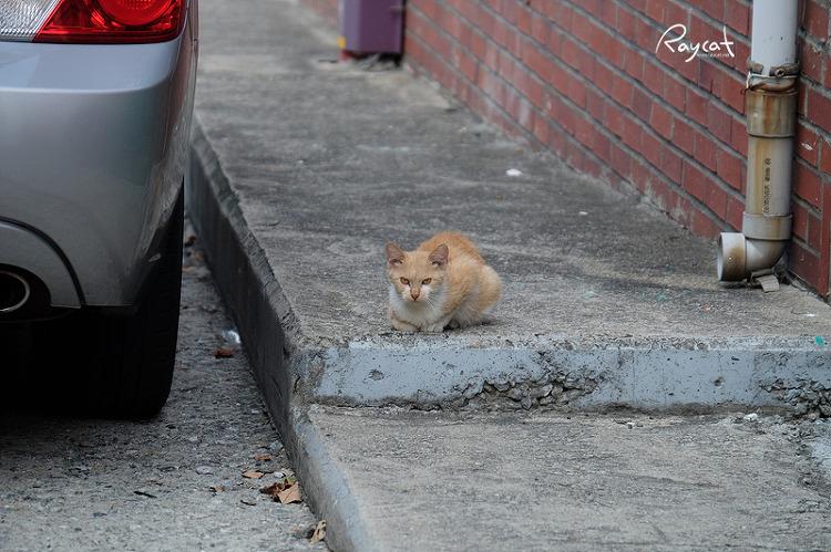 골목길 길고양이