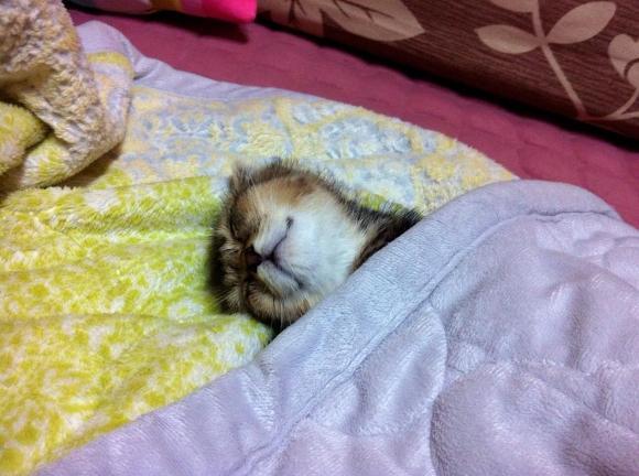 잠자는 고양이