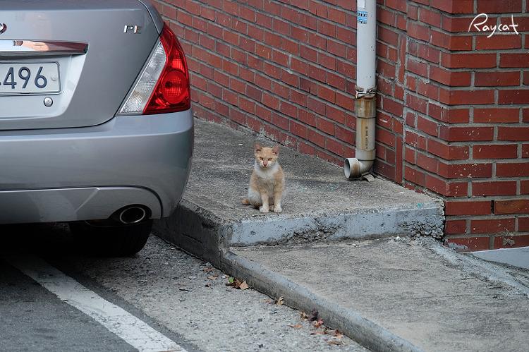 골목길 길고양이 나를 감시하고 있다.