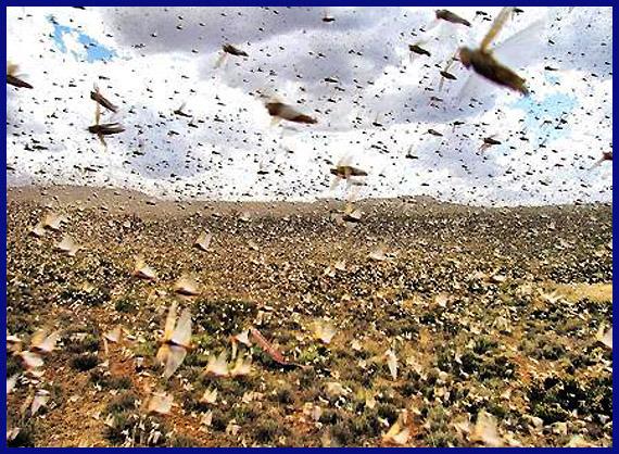 시바여왕 :: 전남 해남군에 수십억마리 메뚜기떼 습격, 출몰, 괴물 메뚜기떼 습격 / 농작물 피해 발생 ... Locusts Swarm Bible
