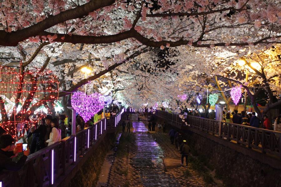 진해벚꽃축제/여좌천/진해군항제