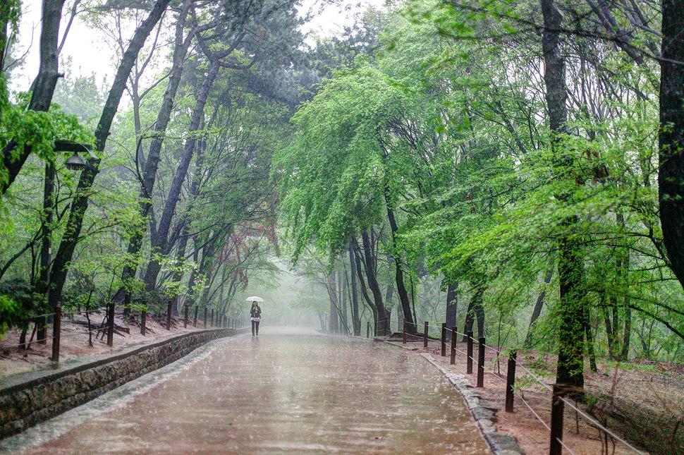 얼마 지나지않아 빗줄기가 굵어졌고 우산은 들고있었지만 필요 없을만큼의 폭우가 쏟아졌다.