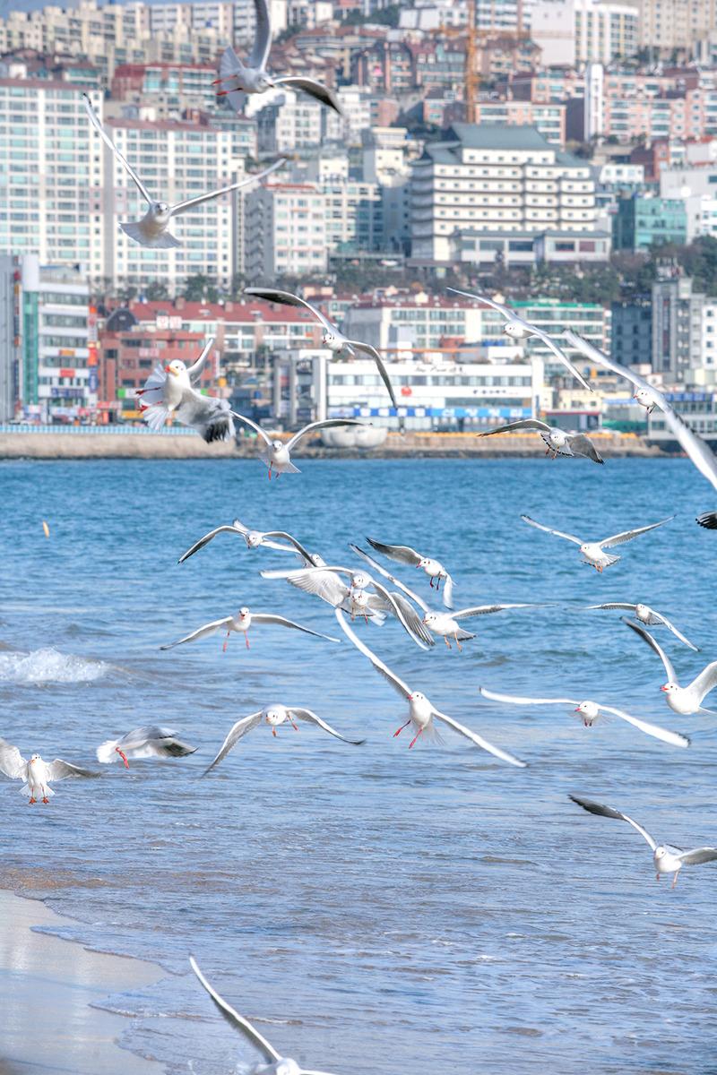해운대해수욕장에서 갈매기 촬영한 사진