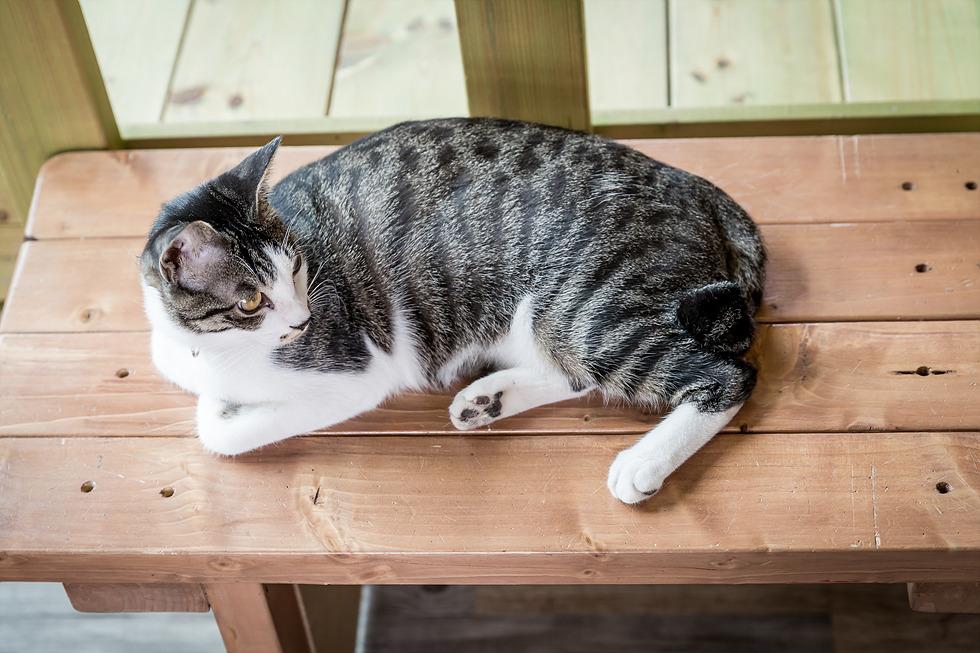 달타는 고양이(달타냥) 수원 고양이 카페