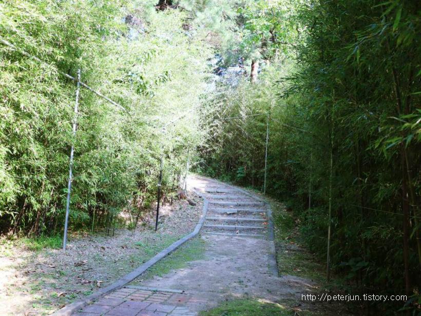 오죽헌 안에 있는 대나무 산책길