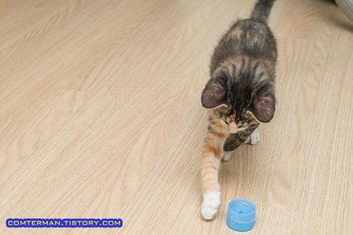 고양이 축구 페트병 뚜껑