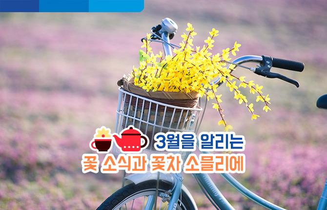 자전거 개나리 봄꽃 봄 꽃차 소믈리에