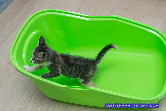 사빅 아세오 화장실 고양이