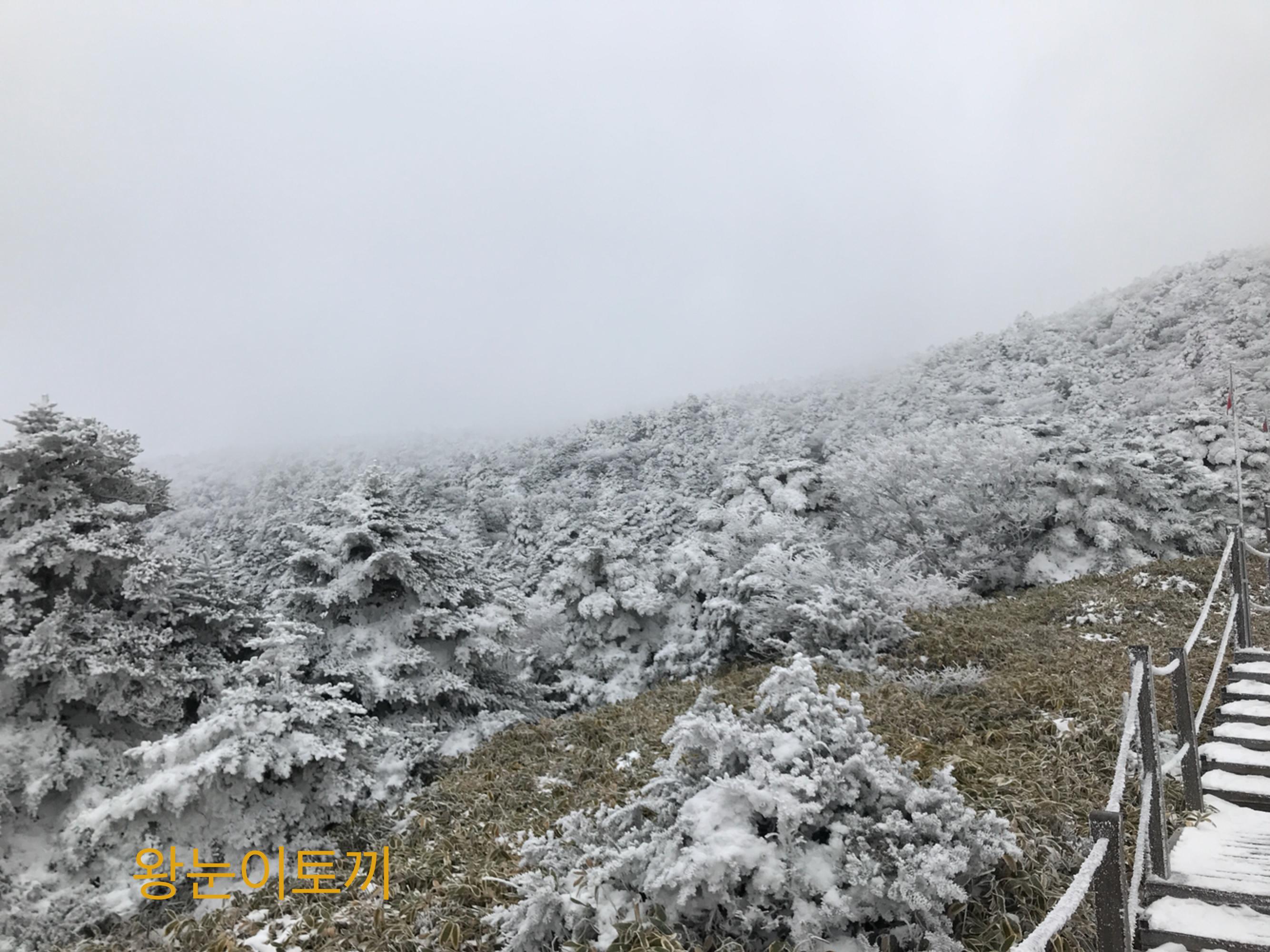 한라산 등산정보&최신 꿀팁
