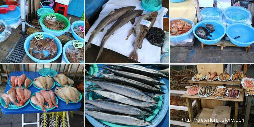 주문진항 생선들