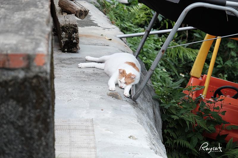 허우통 고양이 마을의 고양이1