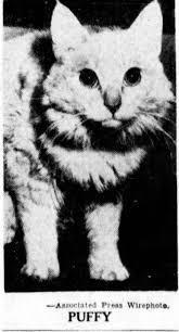 최면술사 퍼피 2차 세계대전 고양이 최면